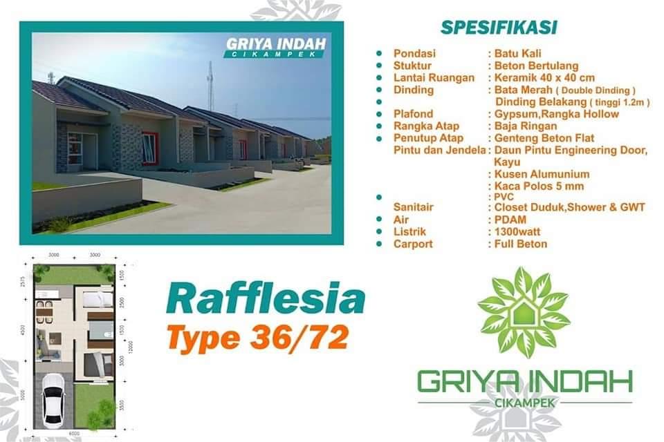 Cluster Rafflesia type 3672m